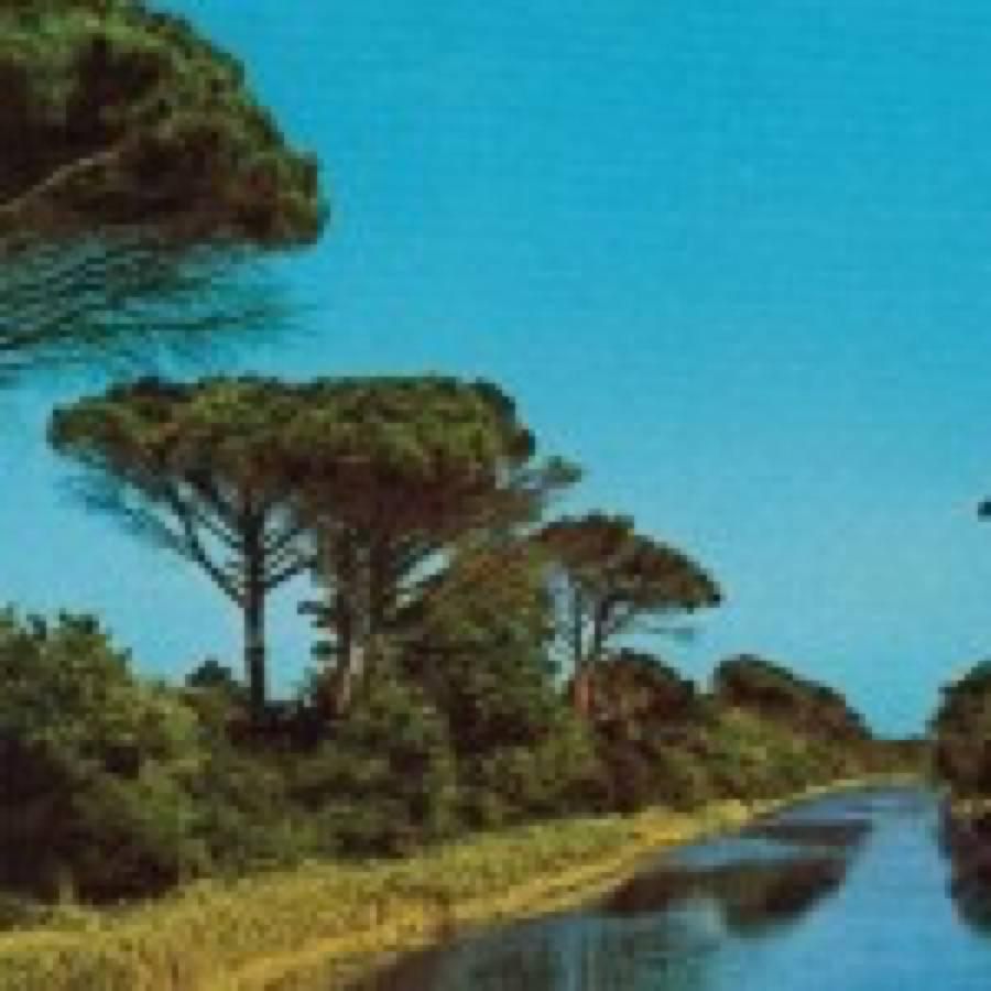 Pinarella blues