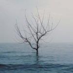 FLOW #74 – L'isola che non c'è