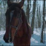Flow #82 – Il mio regno per un cavallo!?