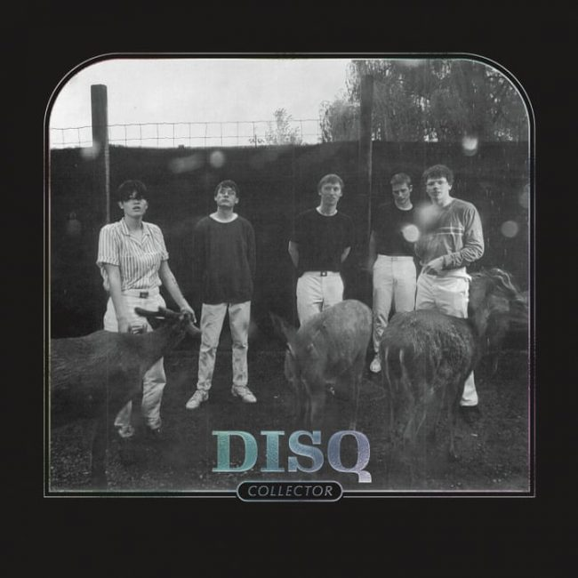 Disq – Collector